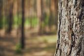 Közeli nézet textúrájú fa az erdőben a másolási tér