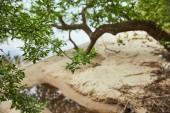 Fotografie Selektivní zaměření písečného pobřeží a větví se zelenými listy na stromech blízko řeky