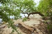 Fényképek Zöld levelek a fák ágai közelében folyó homok partvidék