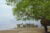 tree with green leaves on sand near calm river