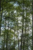 Zöld levelek az erdőben kék ég háttérben