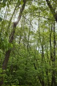Low angle view of green forest with leaves trees