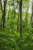 Zelené listy z rostlin a stromů v letním lese
