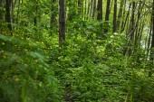 Fotografie grüne Pflanzen, Bäume und Gras im Sommerwald