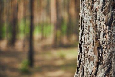 """Картина, постер, плакат, фотообои """"закрыть вид текстурированного дерева в лесу с пространством для копирования печать фото"""", артикул 270357080"""