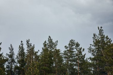 low angle view of trees on grey sky background