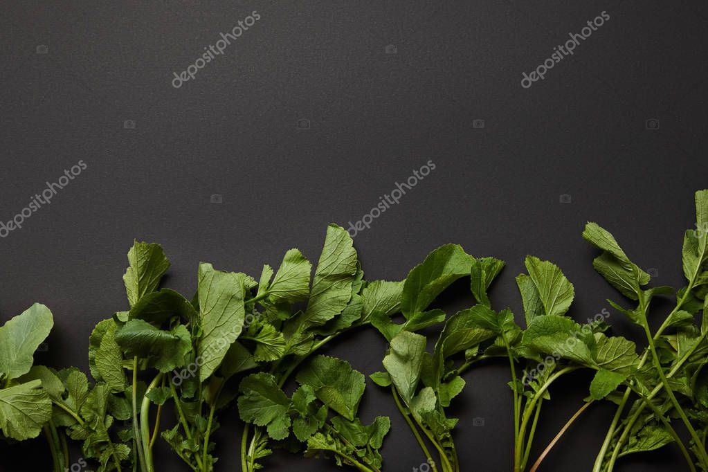 top view of green radish leaves on black background with copy space