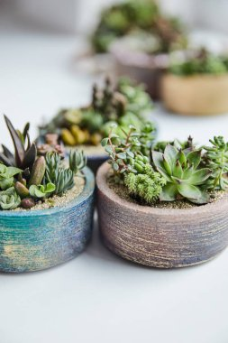 Close up view of green succulents in textured flowerpots on white background stock vector