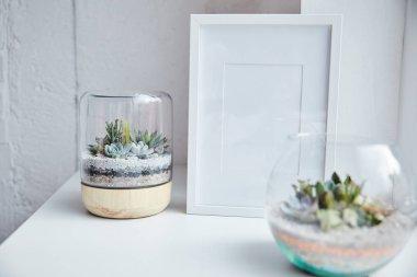 beyaz yüzey, ev dekorasyonu üzerinde boş fotoğraf çerçevesi yakınında saksılarda yeşil sulu seçici odak