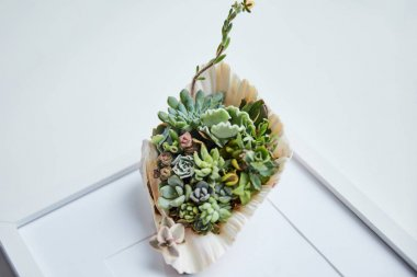Close up view of green succulents in seashell on white photo frame stock vector