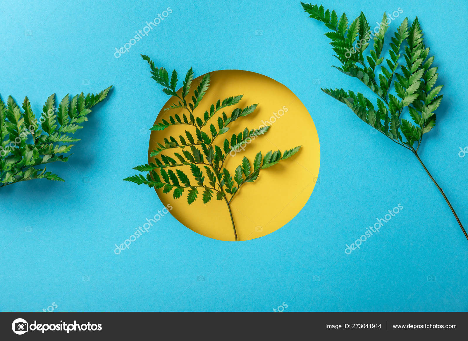 Green Fern Leaves Yellow Hole Blue Paper — Stock Photo