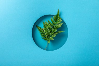 green fern leaf in round hole on blue paper