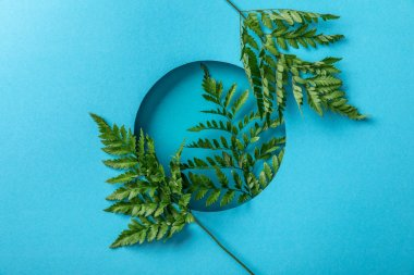 Green fern leaves in round hole on blue paper stock vector