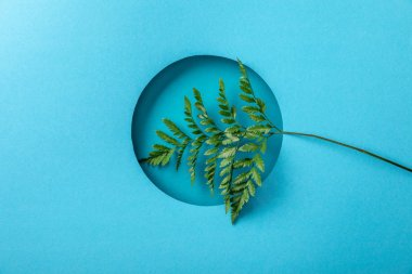 green fern leaf in round hole on blue paper background