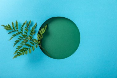 green fern leaf in round hole on blue paper with copy space