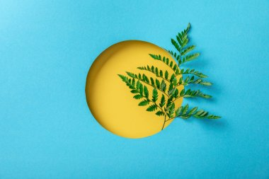 geometric background with green fern leaf in yellow round hole on blue paper
