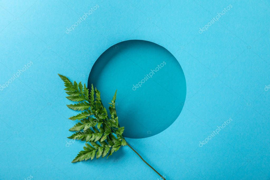 green fern leaf at round hole on blue paper
