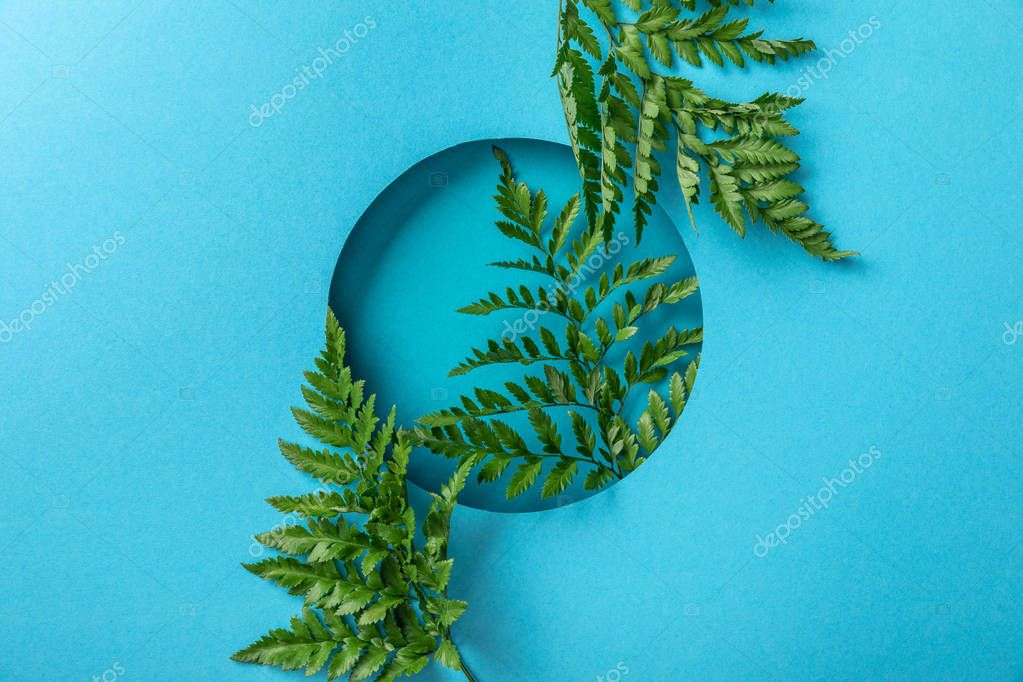 decorative green fern leaves in round hole on blue paper