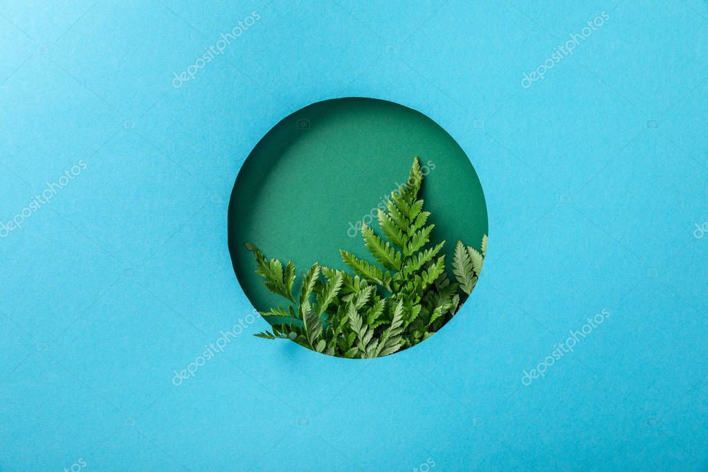 fern leaves in green round hole on blue paper