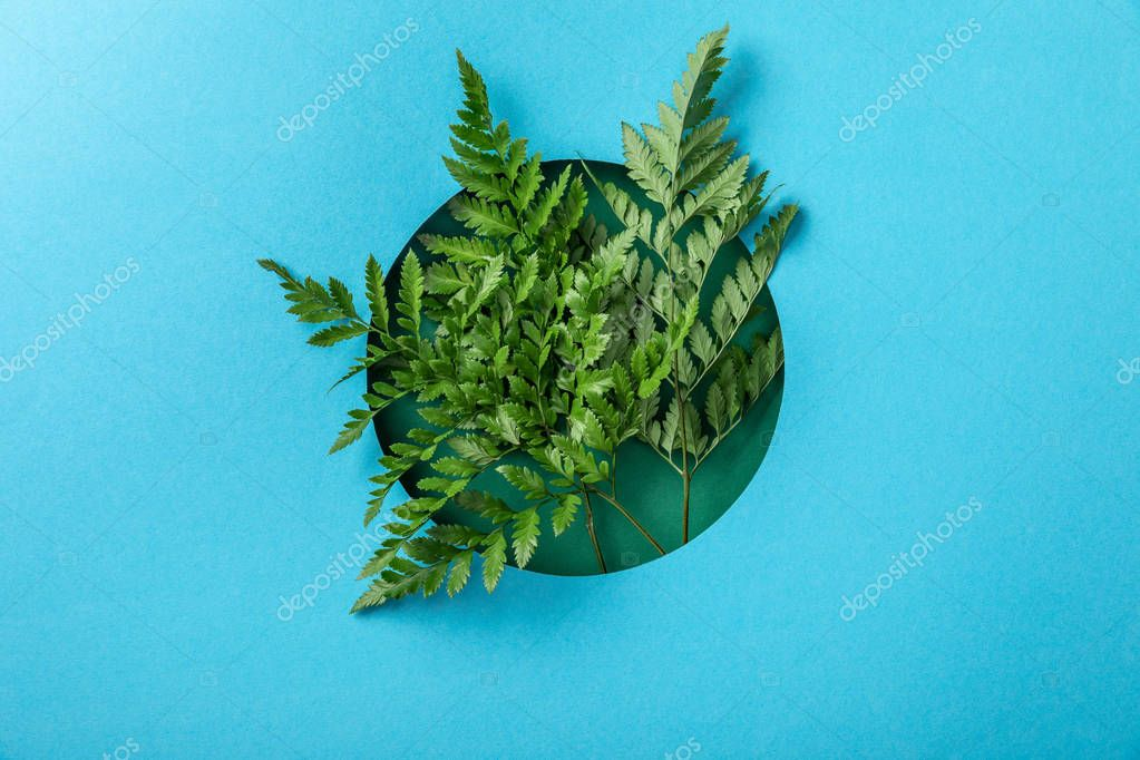 green fern leaves as decorations in round hole on blue paper
