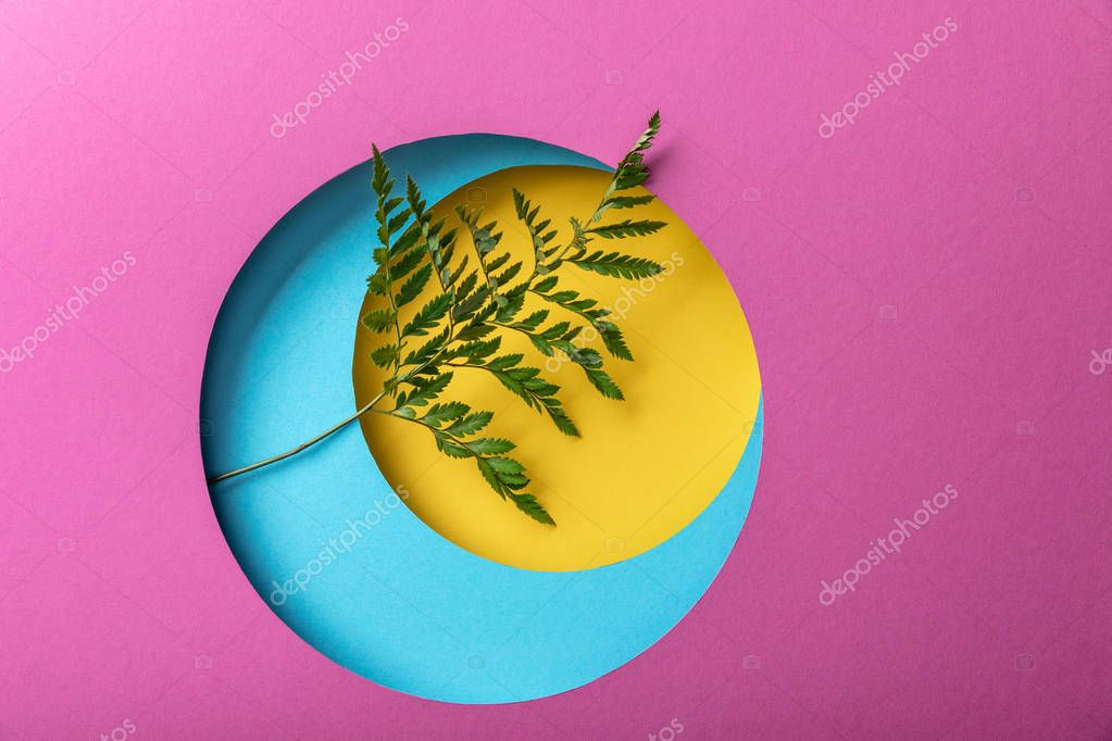 Green fern leaf on colorful paper background stock vector