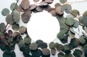 Květinové vzory se zelenými eukalypty větvemi a kruhovou konstrukcí