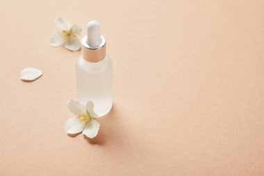 cosmetic glass bottle with serum and few jasmine flowers on beige