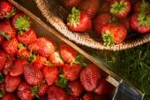 Nejlepší pohled na surové jahody v dřevěné krabici a proutěný koš na trávě