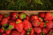 Nejlepší pohled na čerstvé jahody v dřevěné krabici na zelené trávě