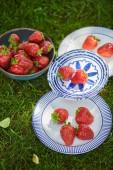sladké organické jahody v misce a talíře na zelené trávě