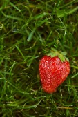 close up of fresh red strawberry on green grass