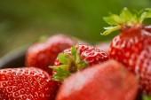 selektivní zaměření surových červených jahod na zelenou trávu