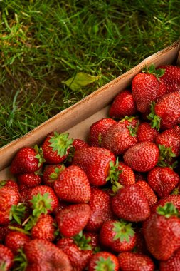 top view of organic strawberries in wooden box on green grass