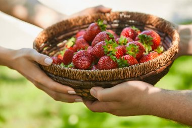 cropped view of couple holding wicker basket with sweet strawberries