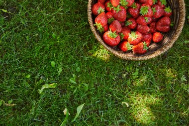 top view of fresh strawberries in wicker basket on green grass