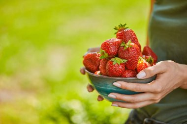 cropped view of woman holding bowl full of red strawberries