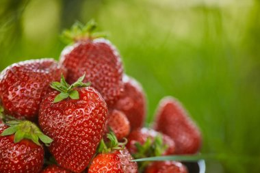 selective focus of organic red strawberries on green grass