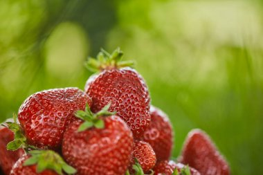 selective focus of fresh organic strawberries on green grass