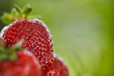 selective focus of fresh red strawberries on green grass