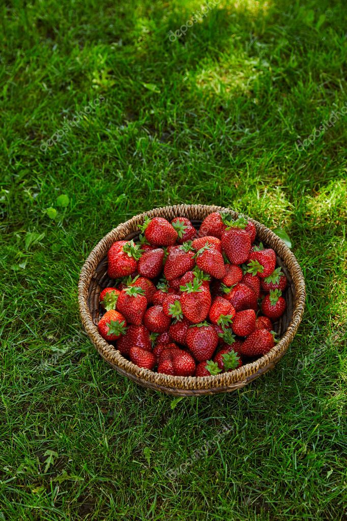 sweet red strawberries in wicker bowl on green grass