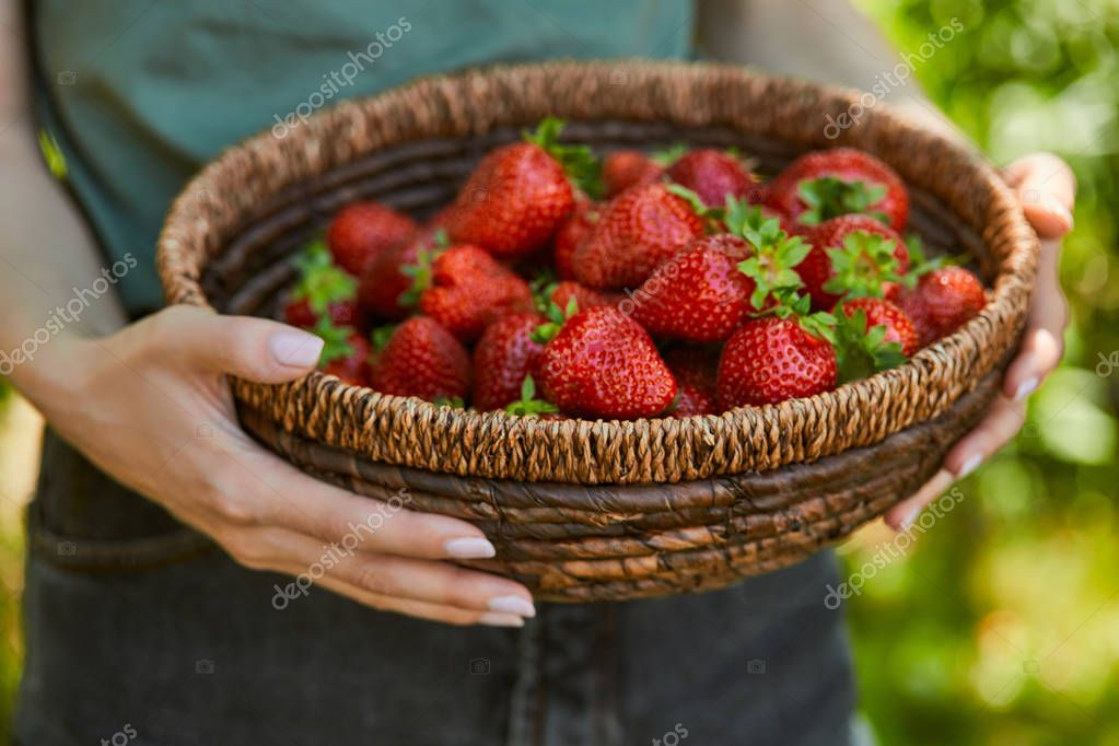 cropped view of woman holding wicker bowl with red strawberries