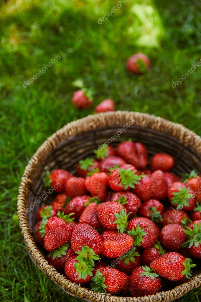 sweet fresh strawberries in wicker basket on green grass