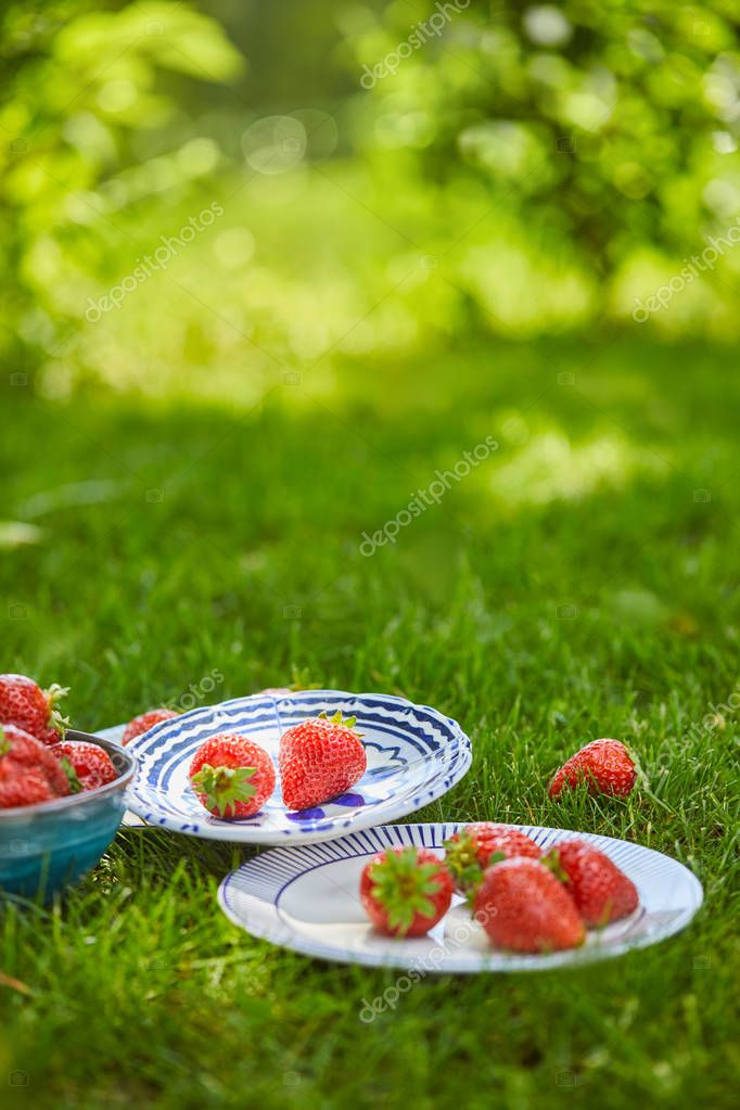 selective focus of red sweet strawberries in bowl and plates on green grass
