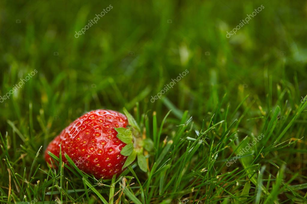 selective focus of fresh strawberry on green grass with copy space