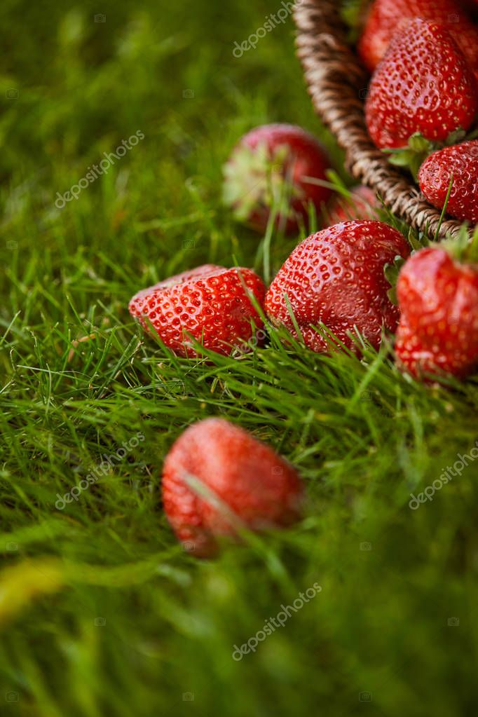 selective focus of fresh strawberries in wicker basket on green grass