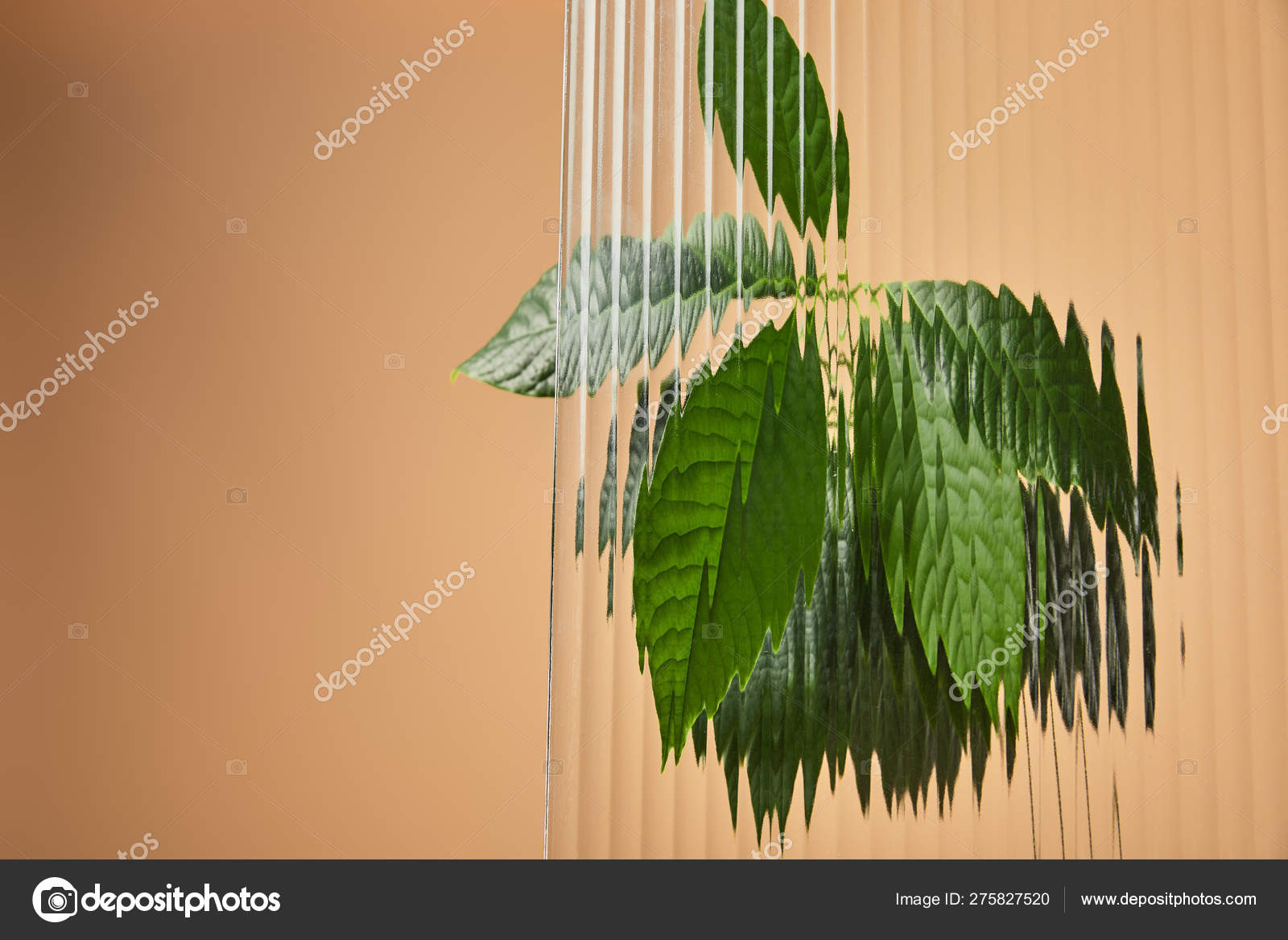 Green Leaves Avocado Tree Reed Glass Isolated Beige — Stock