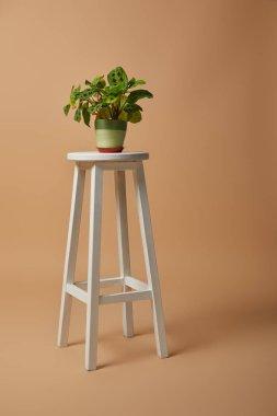 Green plant in flowerpot  on bar stool on beige background stock vector