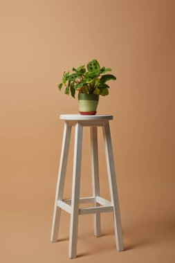 Plant with green leaves in pot on white bar stool on beige background stock vector