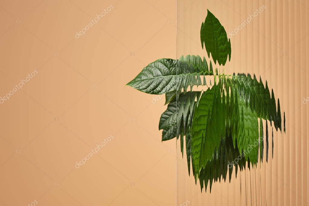 green leaves behind reed glass isolated on beige