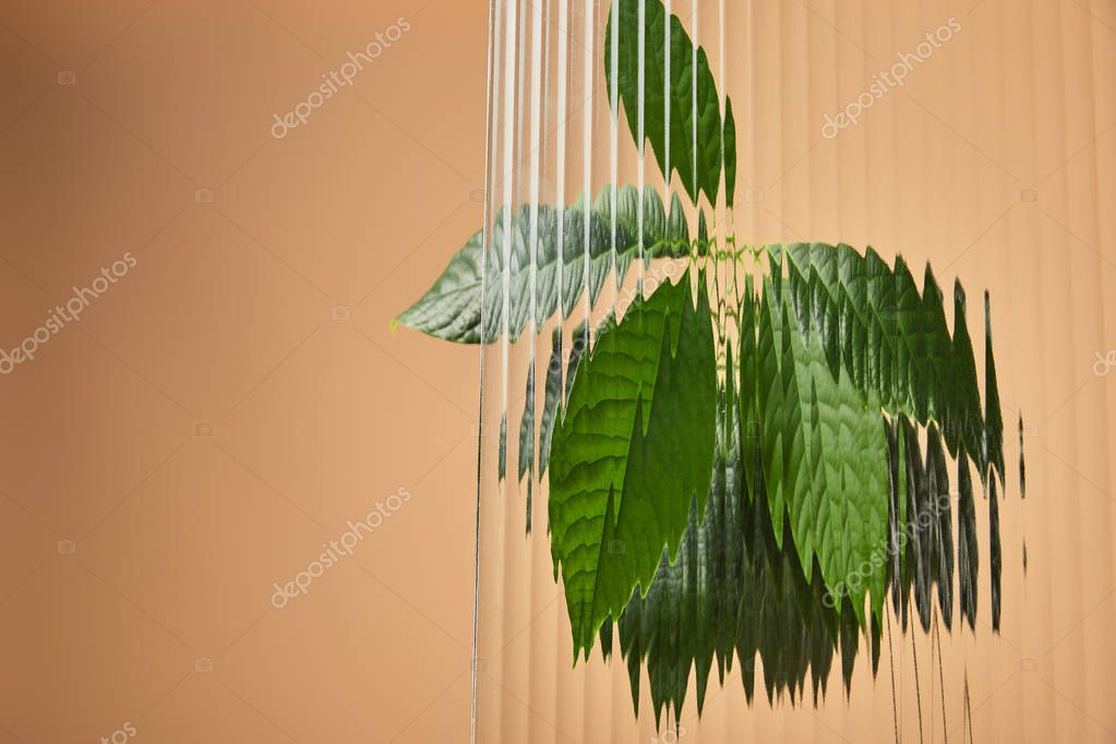 green leaves of avocado tree behind reed glass isolated on beige